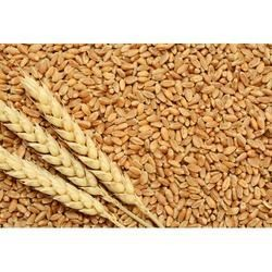 Haleem Wheat | Iowa African Market